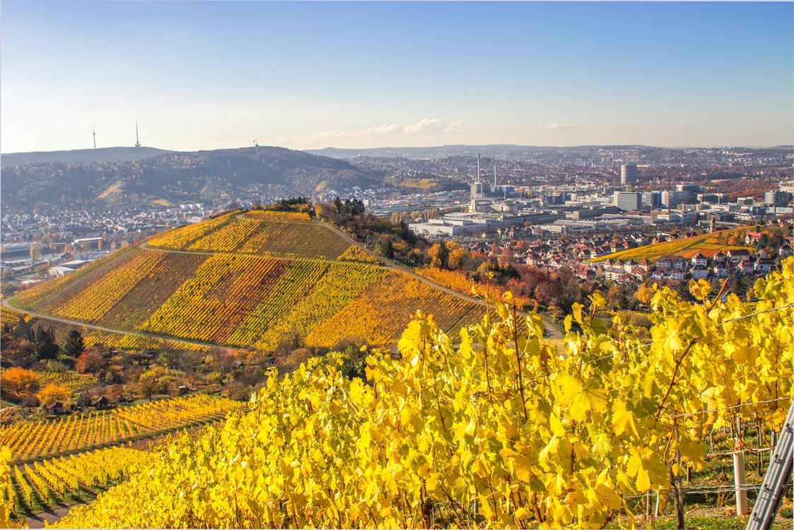 Blick von den Weinbergen über Stuttgart